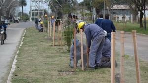 Más árboles para Curuzú