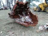 Aclaración por los árboles cortados en el Parque Mitre